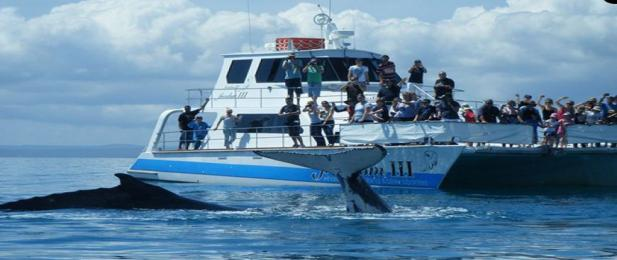 Whale Watching with Freedom III, Hervey Bay