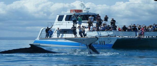 Whale Watching with Freedom III, Hervey Bay