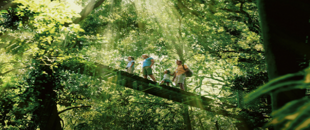 Gold Coast Hinterland Rainforest Tours and Glow Worm Tour