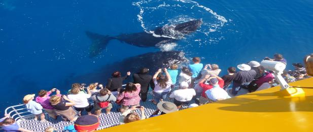 Spirit of Hervey Bay whale watch, close encounters