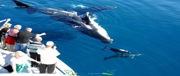 Whalesong Cruises with Whales and Dolphins