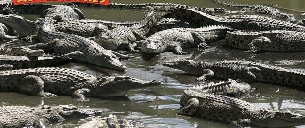 Hartleys Crocodile Farm, Cairns, Tropical North Queensland
