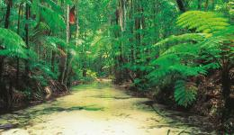 Wangoolba Creek, Fraser Island Explorer Day Tour