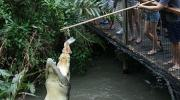 Pole Feed a Croc at Hartleys Crocodile Adventure Farm