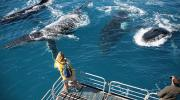 Whale watching on board Tasman Venture.