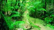 Fraser Island Rainforest - Courtesy of Tourism Queensland