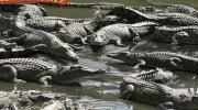 Hartleys Crocodile Farm, Cairns, Tropical North Queensland